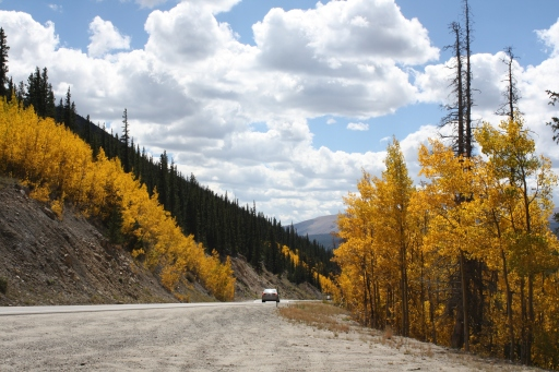 Driving through the Rockies during late summer, you might get to see golden Aspens like I did. (Photo by Erin Klema)