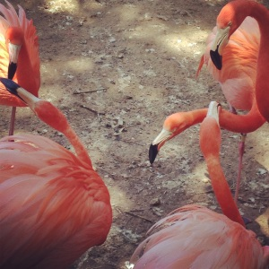 These talking flamingos seemed all riled up. Something ruffled their feathers!