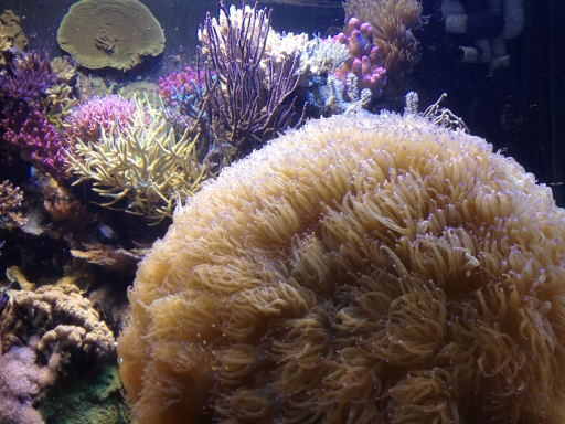 A coral community at the National Zoo