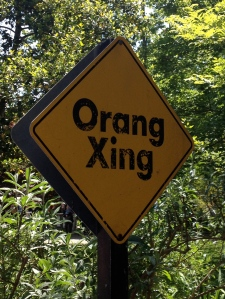 Beware of orangutang crossings! As some zoo visitors discovered today, you don't want to stand directly below.