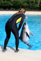 Dolphin and trainer at The Mirage