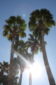 Palm trees at The Mirage
