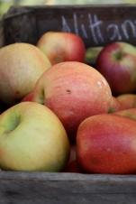 Apples | Where Erin Goes
