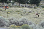 How many elk do you see?