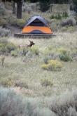 Just chillin' in someone's campsite.