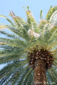 Poolside palm tree at The Mirage in Las Vegas. Every desert has its oasis.