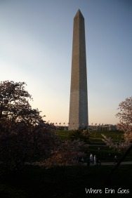 CherryBlossomsWashingtonMonument