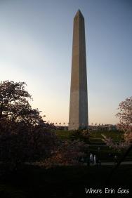 CherryBlossomsWashingtonMonument