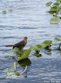 Everglades Bird | Where Erin Goes